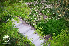 Záhrada vo svahu so schodmi Terrace Garden, Stepping Stones, Sidewalk, Stairs, Outdoor Decor, Appliques, Gardens, Atelier, Riveting