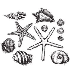 Selection of sea shells drawings vector - by kamenuka on VectorStock®