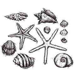 Selection of sea shells drawings vector - by kamenuka on VectorStock®
