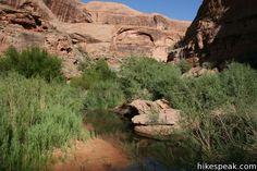 Negro Bill Canyon Moab Utah