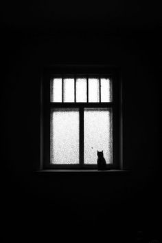 Cat at the window by Ilya Nodia