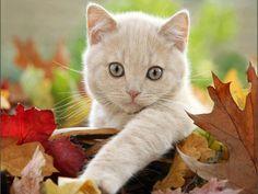 What a cute Kitty!!