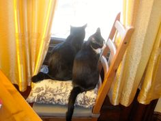 Is bird watching too good for you now Paulina? Heck, I am still interested.