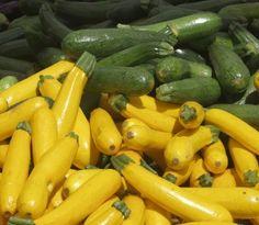 How to Grow Zucchini and Summer Squash - Growing Zucchini in the Organic Garden