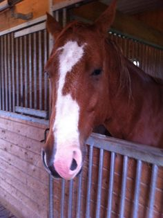 """Love horses - """"Let's go out and play!"""""""