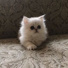 Fluffy Fuzzball - Cool Cat Tree House Fluffy fuzzball - Cool Cat Tree House Fluffy fuzzball - Cool Cat Tree House Carine Volaric - Cartoon Videos Kids For 2019 Animal Room, Puppies And Kitties, Cats And Kittens, Baby Kittens, Cool Cat Trees, Cool Cats, Cute Funny Animals, Cute Baby Animals, Amazing Animal Pictures