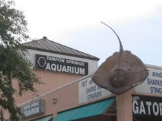 Konger Tarpon Springs Aquarium   850 Dodecanese Blvd.  Tarpon Springs, FL 34689       I haven't been yet so I don't know if it's worth the 8 bucks. I'll let you know. :)