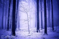 https://flic.kr/p/QGCGWX | Winter simphony | PHOTO OF THE DAY - www.facebook.com/Nikonisti/photos/pb.308308298316.-220752...