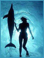 Wild dolphin swim at The Atlantis Rejuvenation Center, Bimini, Bahamas