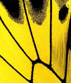 Yellow | Giallo | Jaune | Amarillo | Gul | Geel | Amarelo | イエロー | Colour | Texture | Style | Form | Butterfly wing