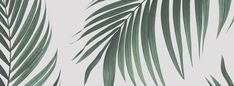 Tropical Palm Wallpaper Mural   Murals Wallpaper Tropical Paradise, Tropical Garden, Palm Leaf Wallpaper, Faux Plants, Own Home, Decoration, Garden Pots, Wall Murals, Plant Leaves