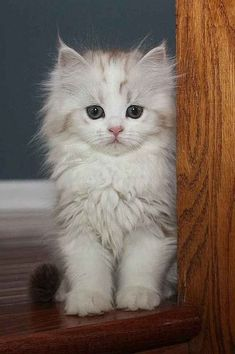So Many Cute Kittens Videos Compilation 2018 per Cute Puppies And Kittens And Babies around Cute Animals Pictures To Draw Cute Fluffy Kittens, Cute Baby Cats, Cute Cats And Kittens, Cute Baby Animals, I Love Cats, Crazy Cats, Kittens Cutest, Funny Animals, Funny Cats