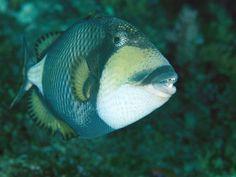 Морское существо навыки выживания Фотографии - National Geographic