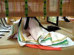 f:id:haruusagi_kyo:20161002131100j:plain Japanese History, Japanese Beauty, Japanese Culture, Heian Era, Heian Period, Kimono Japan, Japanese Kimono, Japanese Colors, Japanese Folklore
