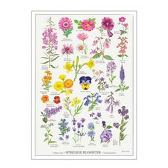 Plakat med spiselige blomster A2