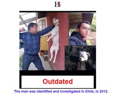 'Man Punching Dog' Protest Message - The images are reportedly genuine and were taken in Chile back in 2011. 2012 news reports on the issue indicate that the man was identified and investigated in relation to the acts of cruelty depicted in the images