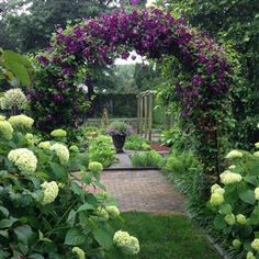 "Ina Garten's SUMMER GARDEN! - I love my garden in the summer when it's bursting with flowers and vegetables! This is a view down the path through the Annabelle hydrangeas (which unlike most hydrangeas don't wilt in the sun!) and the arch covered with climbing purple Clematis ""Jackmanii."" In the distance is the vegetable garden."