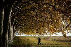 Un hombre camina bajo los árboles, cerca de Laussane (Suiza).- FABRICE COFFRINI (AFP)