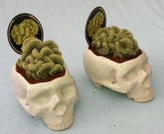 malformalady: Skull planter with brain cactus — a morphological ...