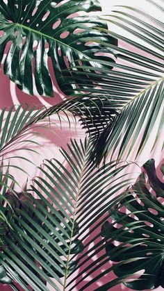 Cute Wallpapers Discover Green tropical leaves on a pink wall Plant Wallpaper, Tropical Wallpaper, Screen Wallpaper, Flower Wallpaper, Wallpaper Backgrounds, Leaves Wallpaper, Trendy Wallpaper, Animal Wallpaper, Colorful Wallpaper