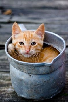 """* * """" I gets all comfortable and nowz yoo decide yoo needz to water yer flowers. Find a different container, will ya? """""""