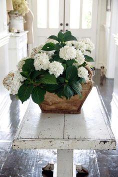 Vieille table en bois blanche