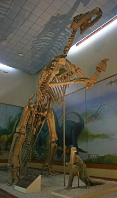 Squelette reconstruit de Shantungosaurus, Naturhistorischen Museum Peking  (Shandong Provincial Museum, Jinan, China). Dinosauria, Ornithischia, Ornithopoda, Hadrosauridae, Euhadrosauria, Saurolophinae. Auteur : Rolfmueller, 2008.
