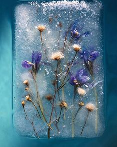 Bruce Boyd- Romantic photographs of frozen flowers in blocks of ice capture the fragility of nature Belle Image Nature, Image Nature Fleurs, Indoor Photography, Creative Photography, Art Photography, Children Photography, Art Floral, South African Flowers, Ice Art