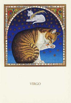 FRANCIEN VAN WESTERING - VIRGO CAT