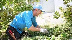 Gardening Services, Weeding, Santa Barbara, Lawn And Garden, Evolution, Mens Sunglasses, Gardening, Grass, Weed Control