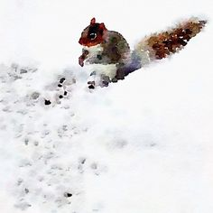"""""""Adoring this little squirrel photo I converted with #Waterlogue"""""""