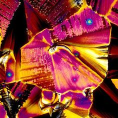 Microscopic Images of Alcoholic Drinks (sake)