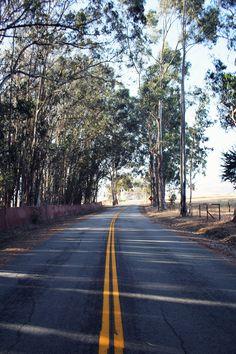 Tree Lined Avenue at San Simeon, California | chescasislost