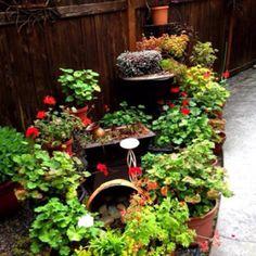 Planning my patio pots