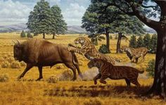 In the period just before they went extinct, the American lions and saber-toothed cats that roamed North America in the late Pleistocene were living well off the fat of the land.