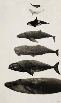Resultado de imagem para whales tumblr