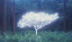 Tree of Life #5-3-7 by Lee Jeonglok