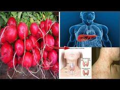 El Mejor Aliado Natural Para La Salud De Tu Hígado, Vesícula Y Tiroides!