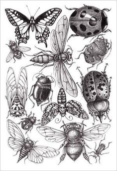 Sketch Book Patterns and Designs - Joyce hamillrawcliffe - Álbumes web de Picasa - Insect Tattoo, Bug Tattoo, Insect Species, Illustration Art, Illustrations, Insect Art, Bugs And Insects, Art Plastique, Blackwork