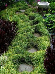 ophiopogon planiscapus nigrescens, black mondo grass