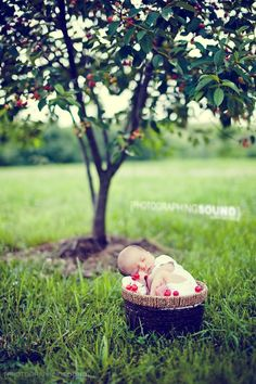 outdoor infant photography ideas | Outdoor Fruit Tree Newborn - PC | Baby photo ideas