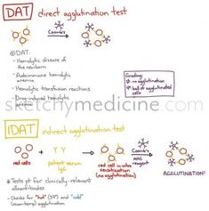 direct antibody Test Looks for the presence of IgG and/or complement on the RBCs. This causes hemolysis and can be due to an autoimmune disease, transfusion reaction, etc. Indirect antibody Test Th...