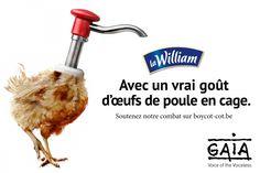 Nouvelle cible contre les œufs de batterie : La William