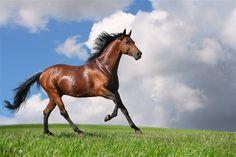 The Trakehner  Trakehner Almanya-nın en eski ırklarından biridir. Trakehner atları halen dünyanın farklı bölgelerinde yetiştirilmektedir. II. Dünya Savaşı-ndan sonraki yıllarda Trakehner aygırları diğer Alman ılıkkanlı türlerine çekilerek farklı cinsler ortaya çıkmıştır.