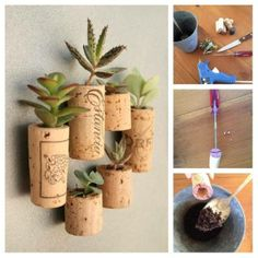 Use large, still moist wine corks as dry ones will crumble.  Dig a hole from the top (penknife, screwdriver) and place a seed in the hole. Cover with soil. Succulents work well as they are compact and easy to maintain.  Water with an eyedropper regularly or dip the bottom of the cork in a bowl of water.  They can be lined up together in a shallow dish or you can glue magnets to the cork if you want to display them on your fridge.  Repot when the plant starts getting too big.