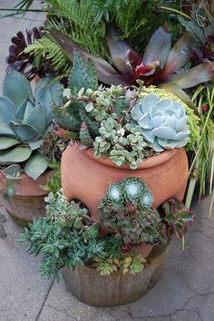 Succulents in strawberry jar