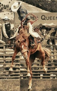 Rodeo Cowboys, Real Cowboys, Cowgirl And Horse, Cowboy And Cowgirl, Cowboy Photography, Rodeo Rider, Bucking Bulls, Rodeo Events, Cowboy Pictures