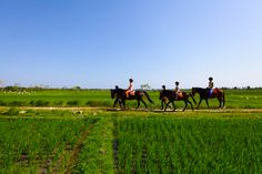 Horse Riding through the ricefields of Bali    www.travelling-bali.com