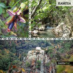 Φθινόπωρο στο φαράγγι της Καμπιάς… ένα μαιανδρικό φαράγγι που σε καλει να το ανακαλύψεις! #kampia #gorge #chios #autumn #nature #fthinopwro #mastiha #mastihashop