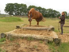 Now it& time for free training - Heidehorsetrail - Trail Riding Horses, Horse Riding Quotes, Horse Riding Tips, Horse Paddock, Horse Stables, Horse Farms, Extreme Trail, Cross Country Jumps, Farm Animal Crafts